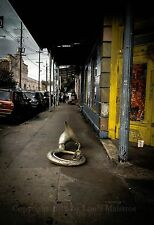 Lonely Tuba, Frenchmen Street, NEW ORLEANS 13x19 Print SIGNED by Louis Maistros