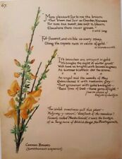 Edith Holden Common Broom Plantagenets Quotes Calligraphy and Botanical Print