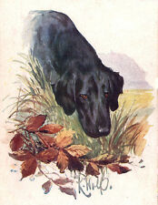 FLAT COATED RETRIEVER CHARMING DOG GREETINGS NOTE CARD HEAD STUDY AUTUMN LEAVES