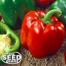 Keystone Resistant Sweet Bell Pepper Seeds 150 SEEDS ORGANIC - SAME DAY SHIPPING