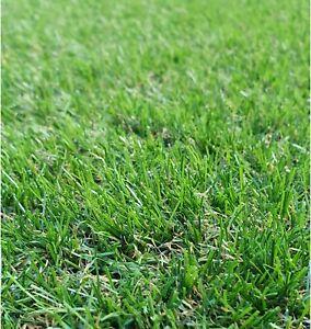 Lynton 35mm Astro Artificial Garden Grass Realistic Natural Fake Turf Lawn