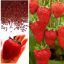 100pcs Red Climbing Strawberry Seeds, Garden Fruit Plant, Sweet And Delicious