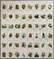 Blumen und Früchte-Quartett von 1910, dreisprachig, Adolf Sala 4769 Kartenspiel