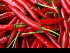 "CHILLI SEEDS CAYENNE ""VERY HOT"" 20 SEEDS"