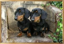 Dachshund Smooth Haired A6 Blank Card No22 By Starprint - Auto combined postage