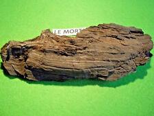 FOSSILE. MORTA. CHÊNE NOIR. BOIS en cours de fossilisation. 5000 ans. BRIÈRE.
