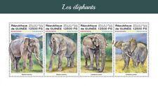 Guinea 2018   Elephants S201806