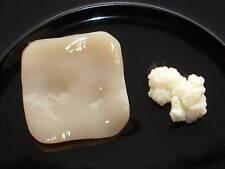 Kontrollierter Lebensmittelbetrieb 2 Pilze: Kombucha Teepilz +  Milchkefir Kefir