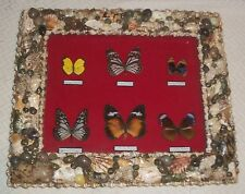 Vtg Entomology Seashell Real Butterfly Shadow Box Display Glass Picture Folk Art