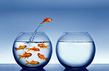 Incorniciato stampa-saltando i pesci rossi (foto poster arte Bass Trote Pesca Carpa)