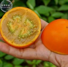 100 pcs/pack Orange Naranjilla Solanum Quitoense Fruit Seeds