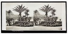 Monaco Monte-Carlo Les Jardins Plaque stéréo attr. à Ferrier c 1860