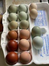 6+ Fresh & Fertile Chicken Hatching Eggs - Variety mix of *Fancy Breeds*