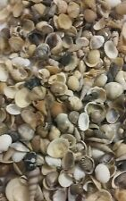 Lot of Mixed Small Sea Shells 3+ oz for Crafts or Coastal Decor
