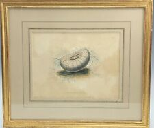 Fine Gold Leaf Framed Antique Hand Colored Sea Shell Conchology Print 100 NR KPB