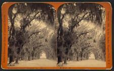 Photo of Stereograph,Bonaventure Cemetery,Savannah,Georgia,c1887,Spanish Oaks