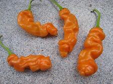 Orange PETER PEPPER-pene Chili - 1000 semi BULK Seeds chiliseeds