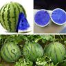 Seeds Blue Watermelon Rare Fruit Vegetables Organic Plant Home Garden New 30 Pcs