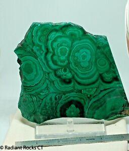 Congo Malachite lapidary face cut slab 1.1 lbs (505 grams)
