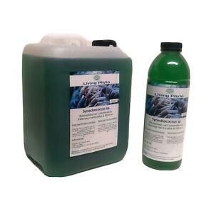 5 Liter Plankton Synechococcus gg. Cyanos vom Züchter Meerwasser phytoplankton