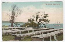 Fish Drying Digby Nova Scotia Canada 1910c postcard