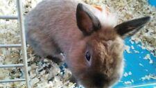 ZDJECIE, KARTKA, FREE PHOTO, PICTURE, WIRTUALNA POCZTOWKA Rabbit