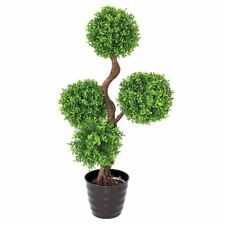 Boxwood Trees Flowers Outdoors