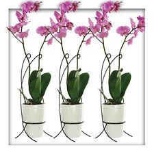 3 Stück Bellissa Orchideenstütze Orchideenhalter Orchideenstab