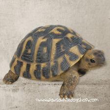 More details for vivid arts real life hermann tortoise xrl-herm-b 28cms lifelike animal statue