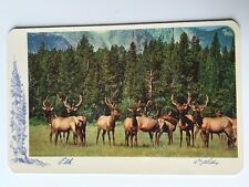 Vintage Postcard - Animals - Elk - 1953