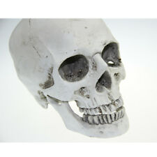 Life Size 1:1 Human Skull Resin Model Anatomical Medical Teaching Skeleton New