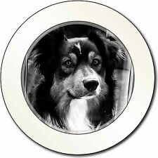Border Collie in Window Car/Van Permit Holder/Tax Disc Gift, AD-CO70T