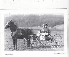 """~Post Card~""""Couple Takes Drive on a Horse & Buggy"""" .../Pigeon Forge, TN/ (A24-1)"""