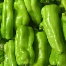 10 Organic Cubanelle Heirloom Caribbean Hot Pepper Seeds