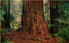 Postcard California CA Redwoods Redwood Tree pm 1960's