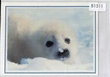 B1511pac Animals Seal Pup Greeting card postcard