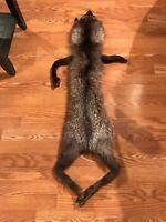 Silver Fox Soft Mount Pelt Skin