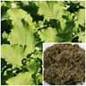 Burdock Leaf, organic, soap making supplies, herbal extracts.