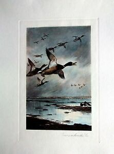 Archibald Thorburn - Coming in From The Sea - Hand Colored (Restrike Etching)