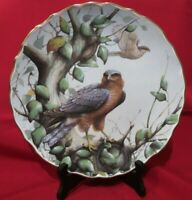 BIRDS OF PREY Plate- Spode Gilt Rim Sparrow Hawk Plate-David A Finney Plate N 3