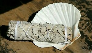 White Sage Smudge Stick + Medium Atlantic Scallop Shell Cleansing Kit Craftmoor