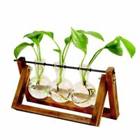 Plant Glass Vase Hydroponic Flower Pot Wooden Frame Stand Terrarium Home Decor