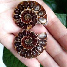 1 Paar Half Cut Ammonite Shell Jurrassic Fossil Specimen Madagascar Stein