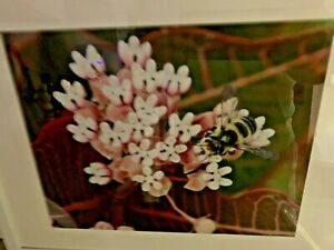 """Metal Framed Art Print 15"""" x 12"""" flowers quiet place The honey bee at work"""