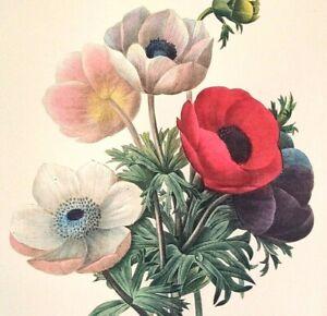 P J Redoute Flowers POPPY ANEMONE Botanical Art Original Book Plate Print