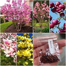 30pcs Mix Magnolia beautiful flower tree seeds Magnolia in pot or outdoor plant