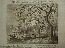 1720 ANTIQUE ENGRAVING EMBLEMS SYMBOLISM CATERPILLARS TREE, JACOB CATS, GARDEN