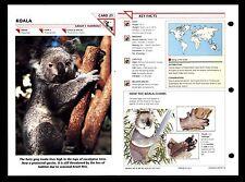 """Koala Bear"" Wild Life Animal Fact File Information Card/Home School Study"
