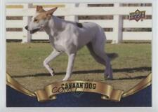 2018 Upper Deck Canine Collection Blue Canaan Dog #20 z6b