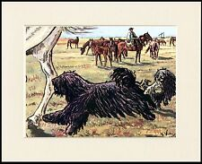HUNGARIAN PULI LOVELY LITTLE DOG PRINT MOUNTED READY TO FRAME